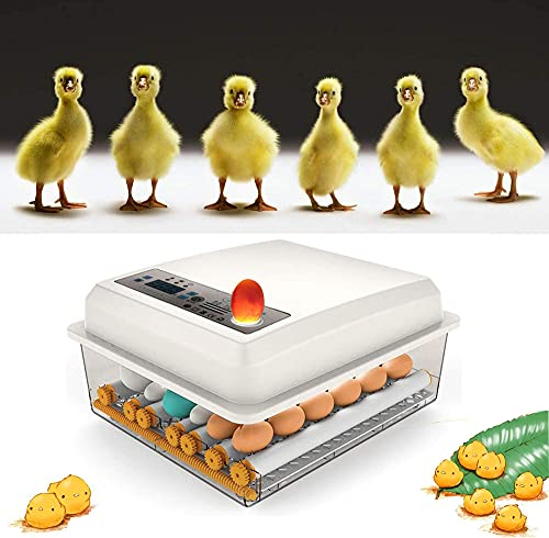 KKTECT Incubadora de Huevos de 16 Huevos Máquina nacedora Huevo Giratorio automático de Temperatura Ajustable para Huevos de gallina,...